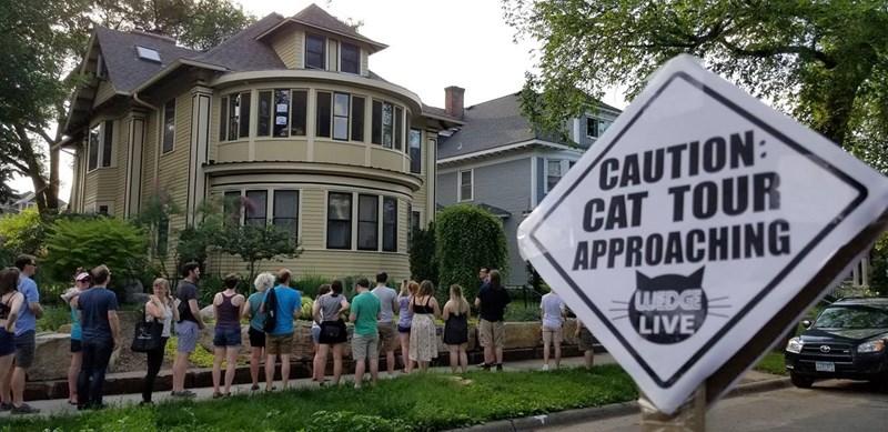 cat tour