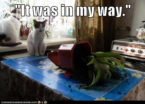 animals captions Cats funny - 8514936576