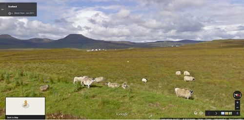 cute sheep image Google Sheep View: A Collection of Sheep From Around the World
