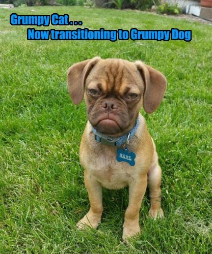 Dog - GrumpyCat.o.. Now transitioning to GrumpyDog RARL