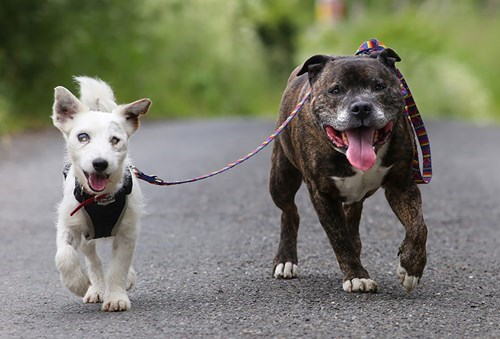 cute dogs image A Blind Dog Has His Own Seeing-Eye Dog and They Are Inseparable