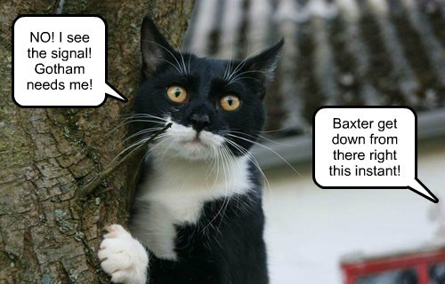 captions Cats funny - 8516100864