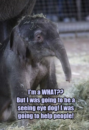 elephant captions funny - 8516295168