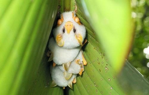 cute bats image Honduran Ghost Bat