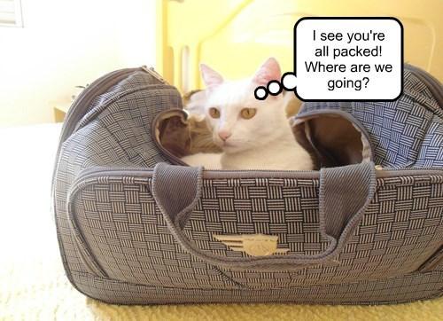 captions Cats funny - 8516470528