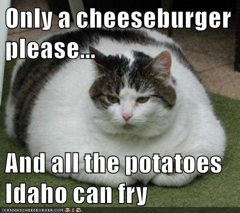 Cheezburger Image 8517085184