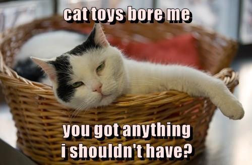 animals captions Cats funny - 8517124864