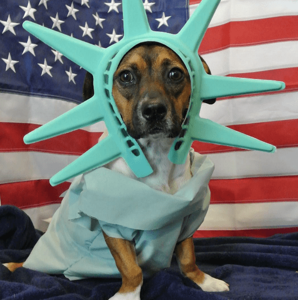 costume dogs united states independence day instagram 4th of july america