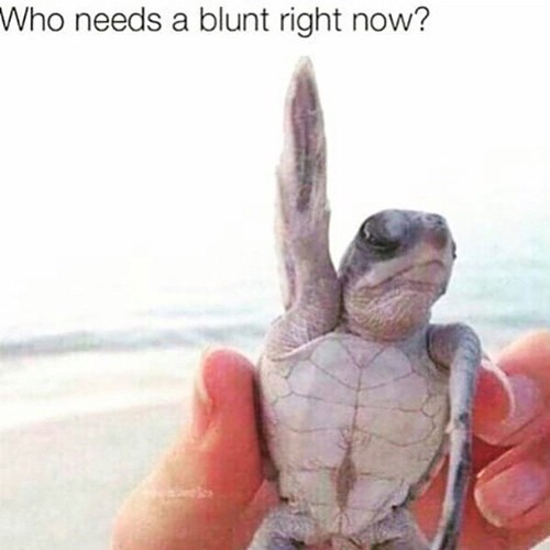 420, turtle, blunt, weed, party animal