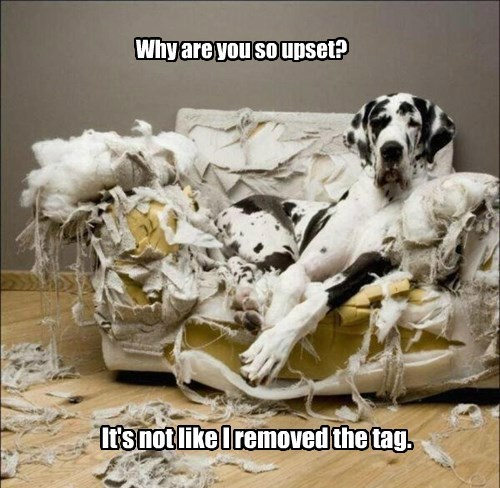 dogs captions funny - 8517777408