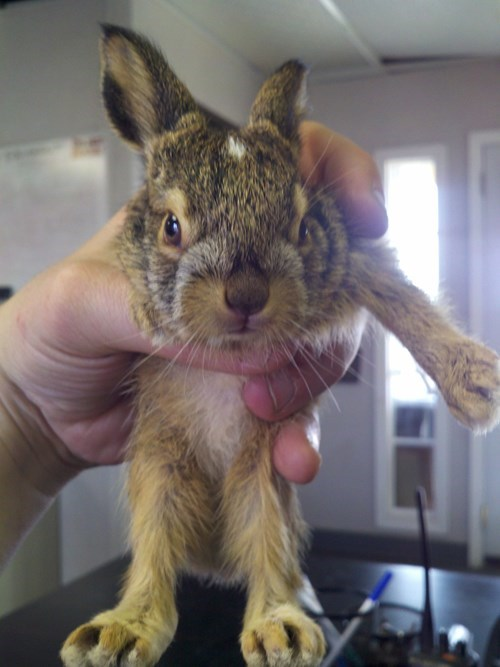 cute rabbit image Unhand Me, Human.