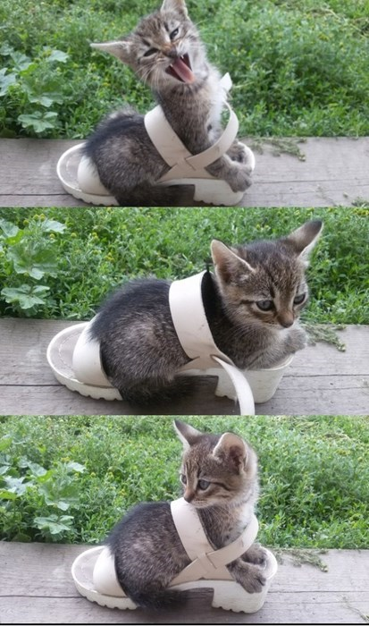 cute cats image If the Shoe Fits...