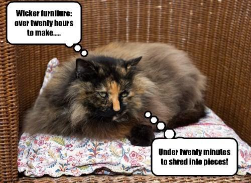 captions Cats funny - 8518007296