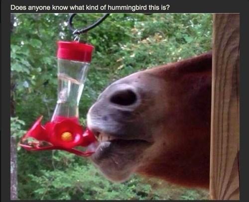 funny-memes-horsingbird