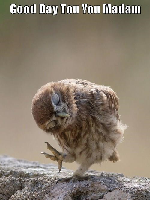 animals captions owls funny