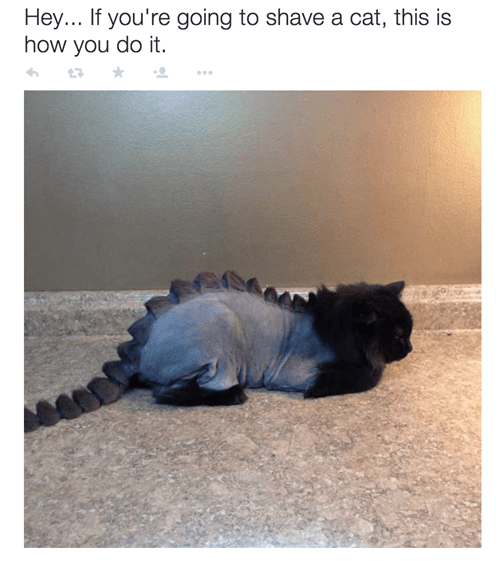 cat shaved like dinosaur