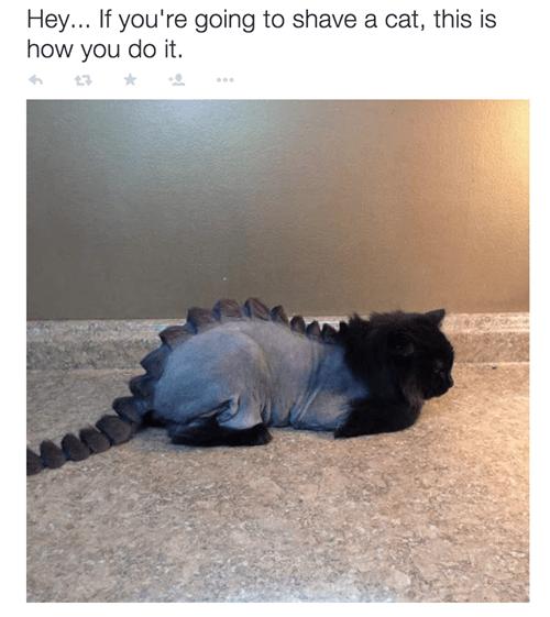 cat shaved like dinosaur