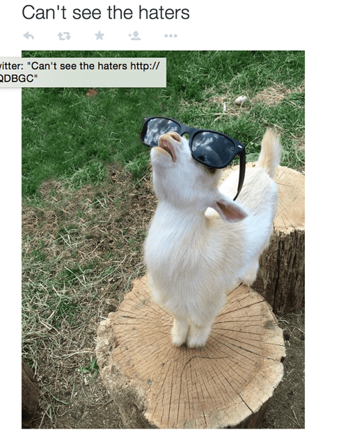 goat with sunglasses no haters