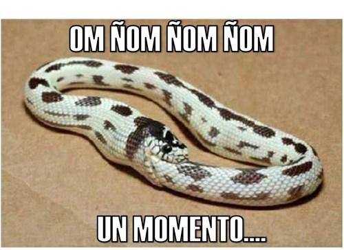 serpiente comiendose