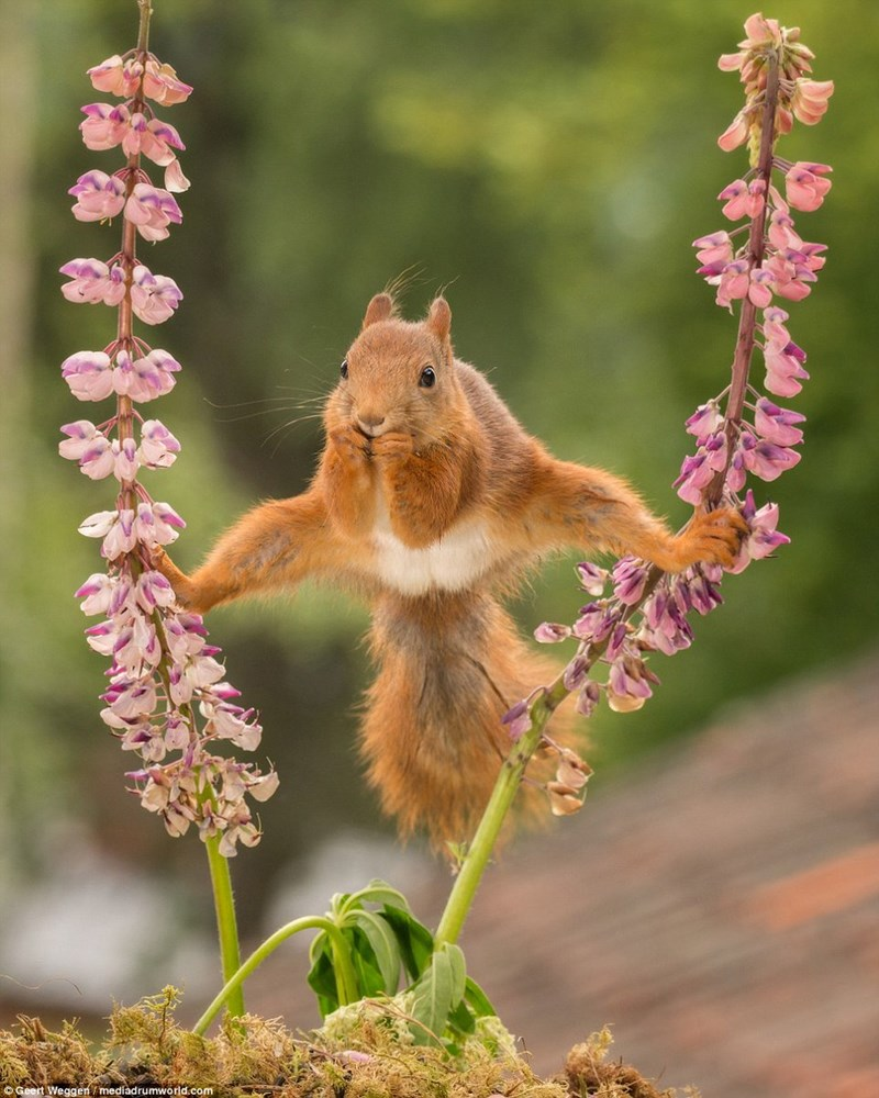 squirrel squirrels photoshop battle Splits - 851973