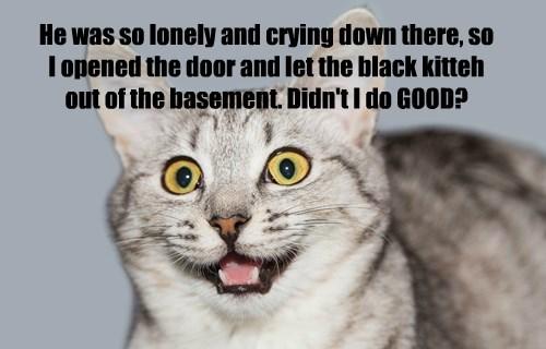 captions Cats funny - 8519956480