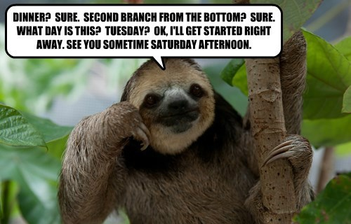 captions,funny,sloth