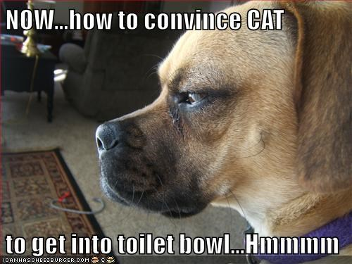 animals dogs captions funny - 8521532160
