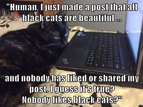 """Human, I just made a post that all black cats are beautiful ...  and nobody has liked or shared my post. I guess it's true?                                                                      Nobody likes black cats?"""