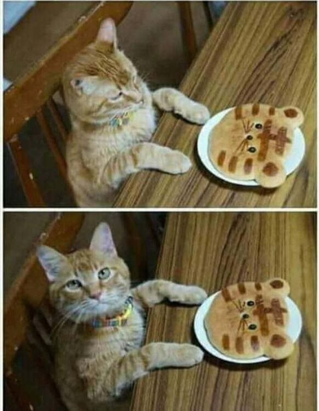 unhappy cat with a mini me cake am I a joke to you before it was a meme