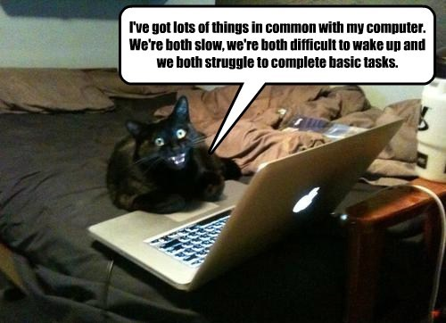 captions Cats funny - 8522488320