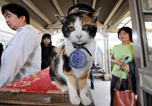 cute cats news Farewell, Station Master Tama