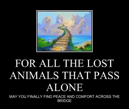 FOR ALL THE LOST ANIMALS THAT PASS ALONE