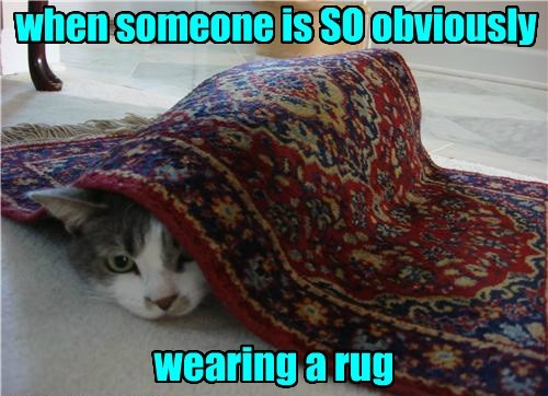 captions Cats funny - 8523913472