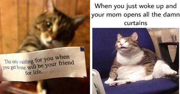 cat memes, lazy cats