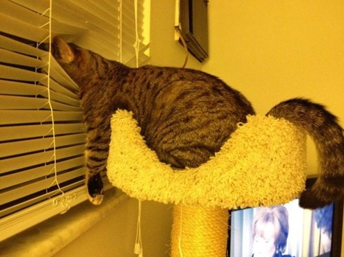 funny cats image Best Seat in the House