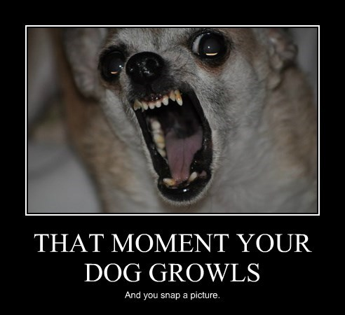 When A Dog Growls At You