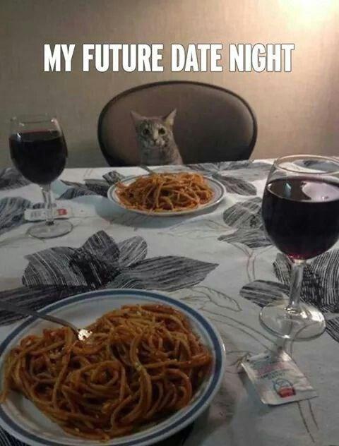 date night, cats, single, cat lady