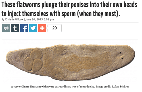 penis, flatworm, lol, sperm