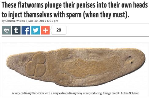 penis, flatworm, lol, sperm