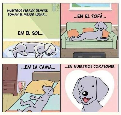 perros en el corazon