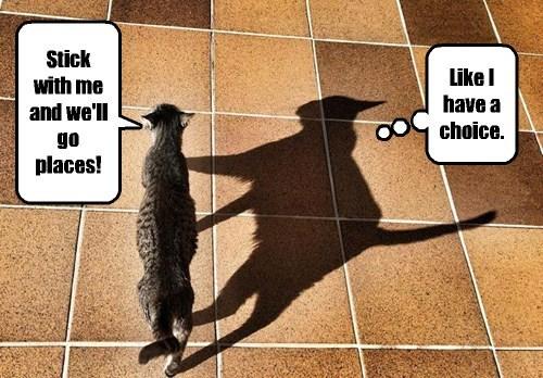 captions Cats funny - 8525834240