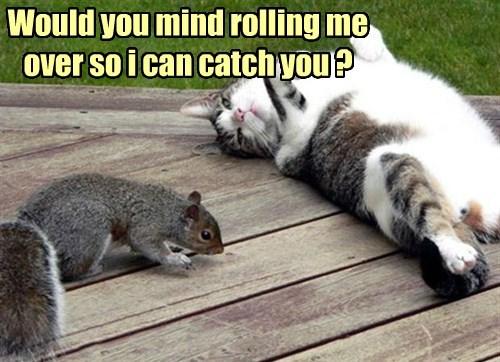 squirrel captions Cats funny - 8526207744