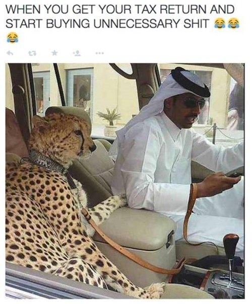 tax return, money, wealth, cheetah