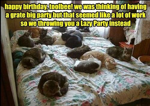 happy birthday, toolbee