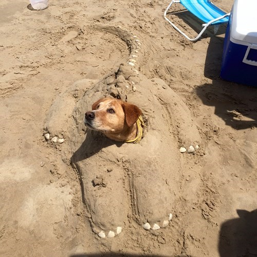 funny dogs image That's an Interesting Shape for a Sand Dune