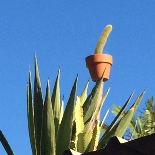 cactus plant on pole above garden