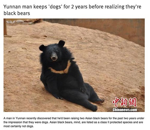 Man Keeps Dogs Actually Bears