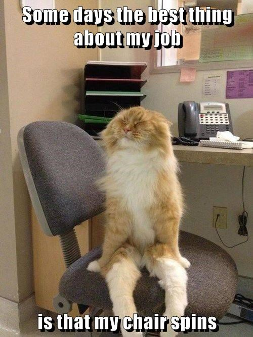 animals work captions Cats funny - 8529551360