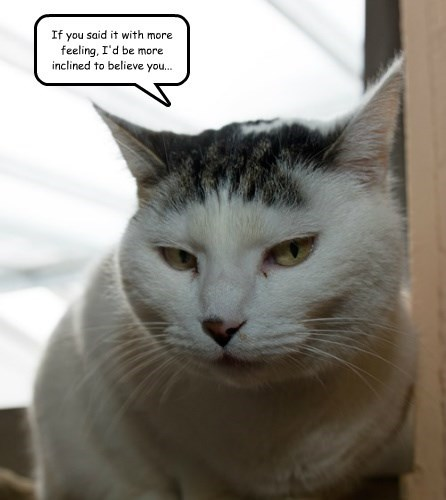 snarky captions Cats - 8529975040