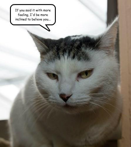 snarky captions Cats - 8529975040